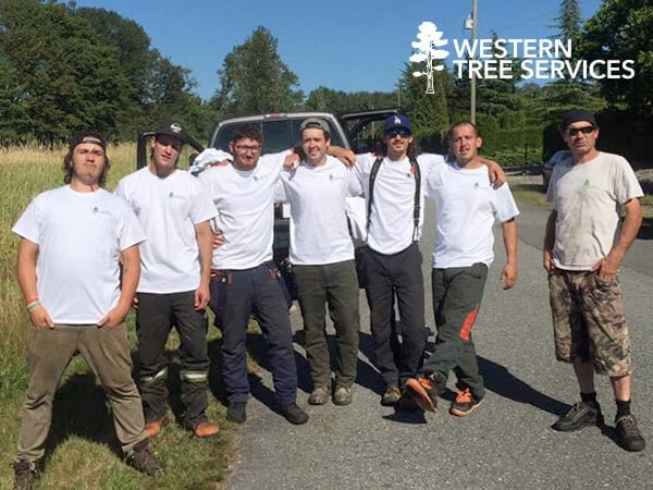 Western Tree Services Corp | About Us