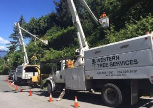 Western Tree Services Corp.