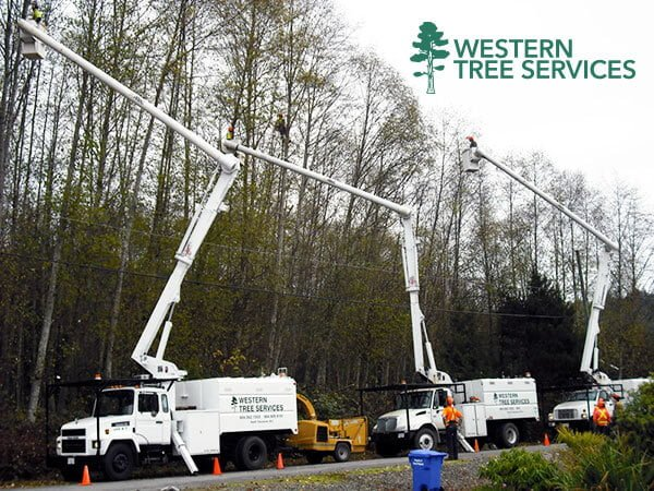 Residential tree services from Wester Tree Services Corp. Serving Vancouver, Surrey, Langley and the Lower Mainland
