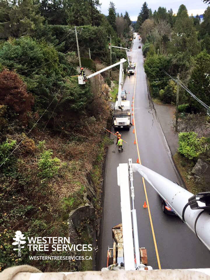 Vancouver residential tree service by Western Tree Services Corp.